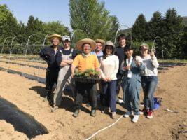 2018年ゴールデンウィークの農業ボランティア